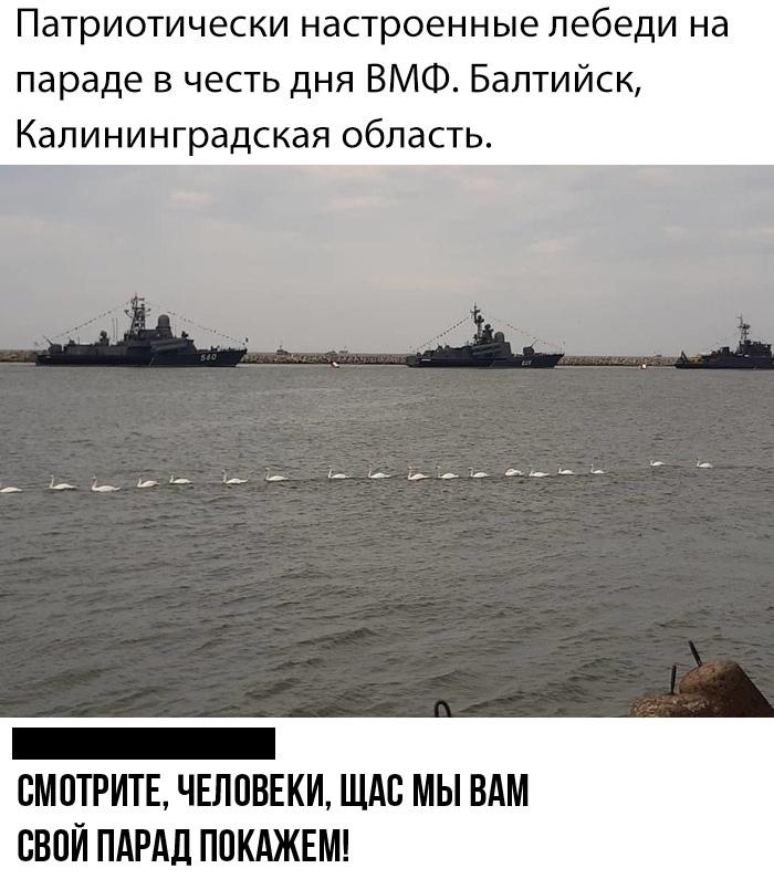 Лебеди_Балтийск_28_07_2019