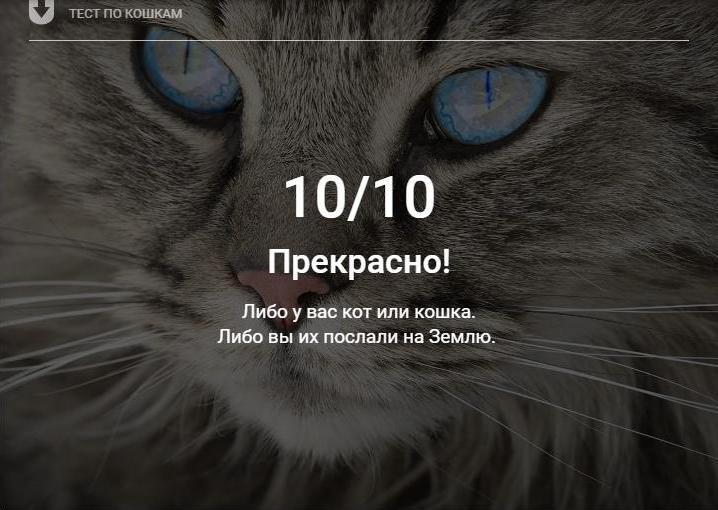 Всемирный_день_кошек_8августа