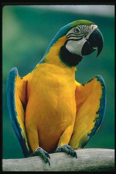 66505301_1289562344_foto_birds_05
