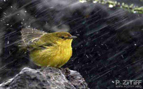 1370127074_1369976539_beautiful_photographs_of_rain_52