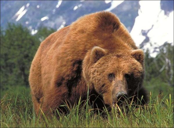 bears-bears-86