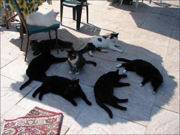 cats-17022011-59