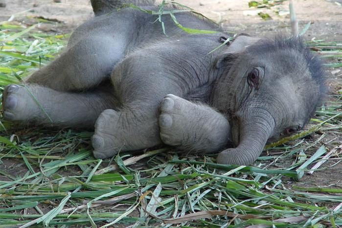 слон18