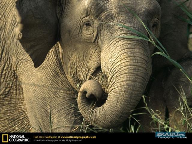 слон16