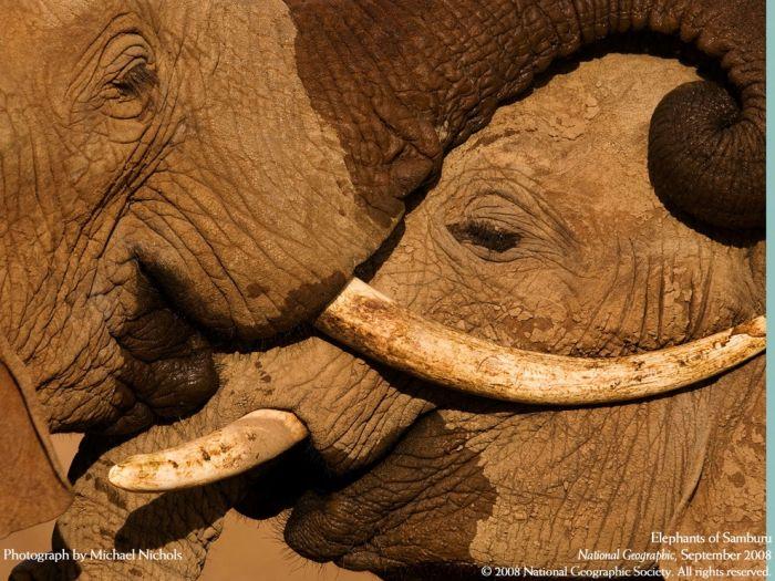 слон21