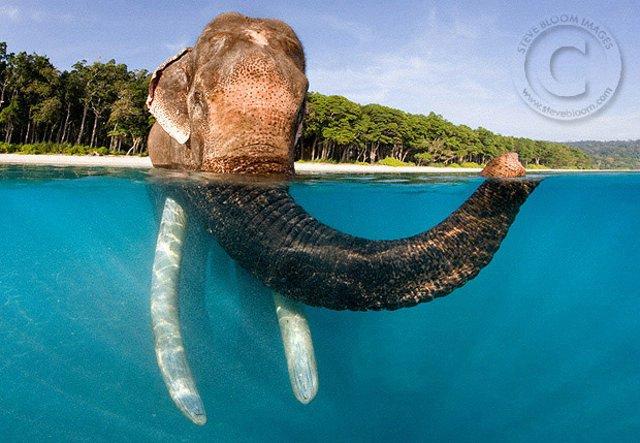 слон22
