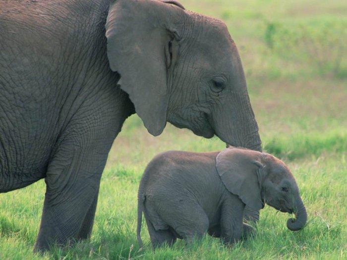 слон23