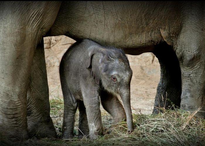 слон24