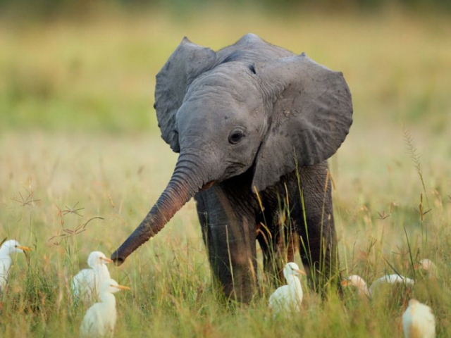 слон29