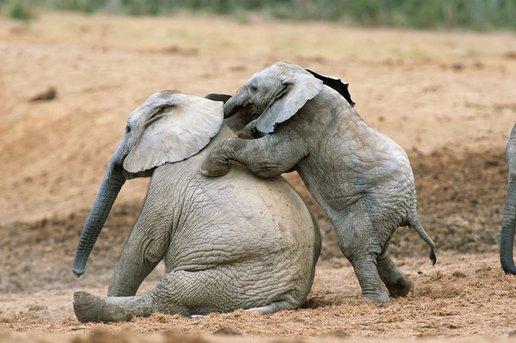 слон30