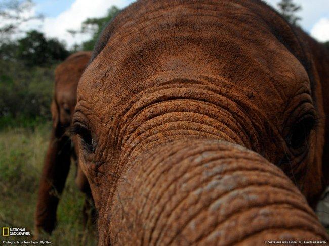 слон33