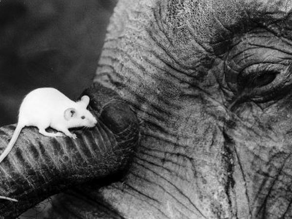 слон34