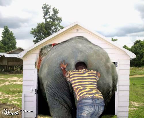 слон36