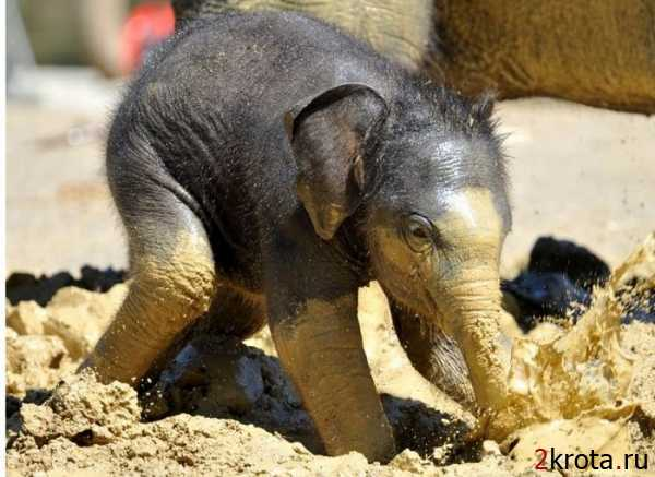 слон37