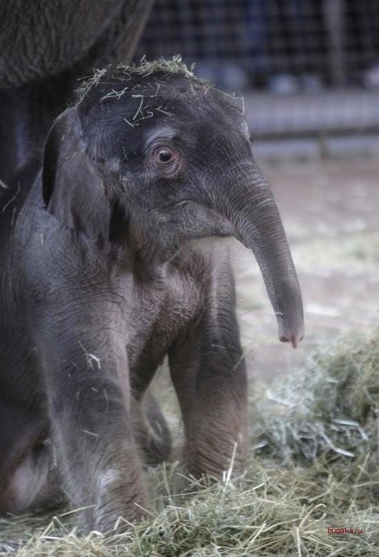 слон41