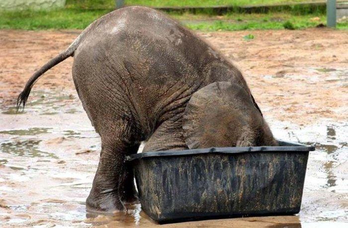 слон43