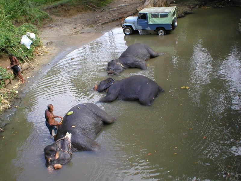 слон49
