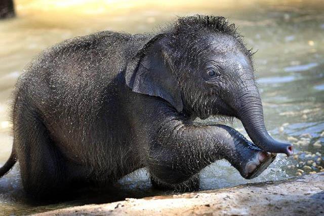 слон50