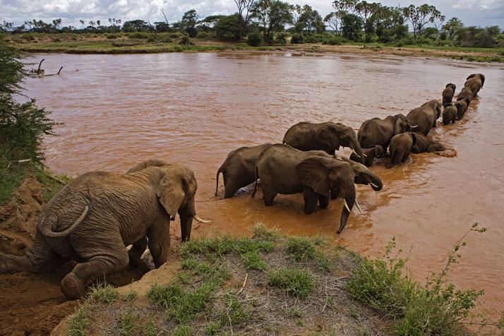 слон56