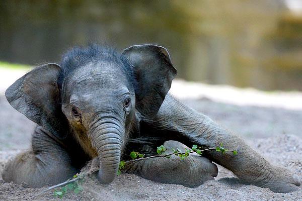 слон57