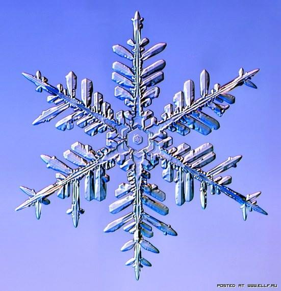 снеж29