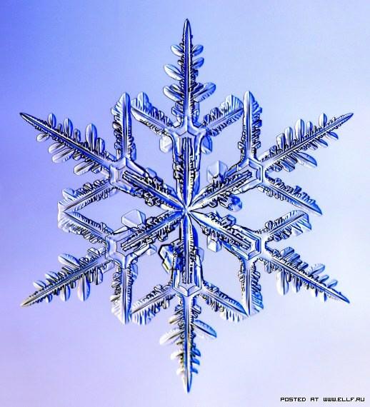 снеж36