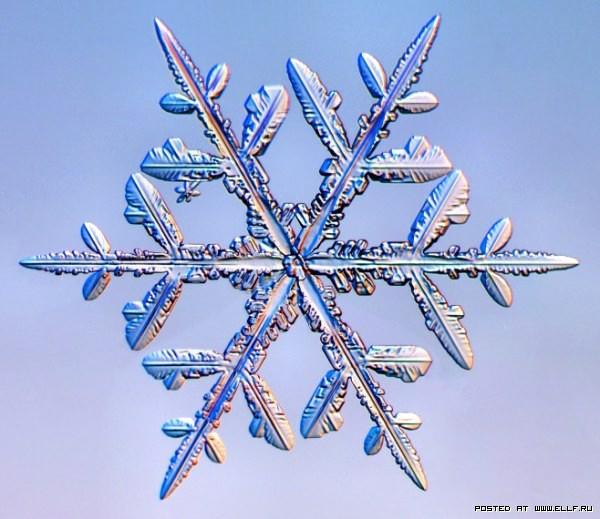 снеж46