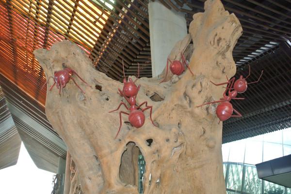 красн мураши