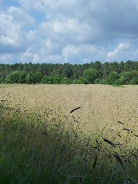 А среди лесов иногда бывают поля:)