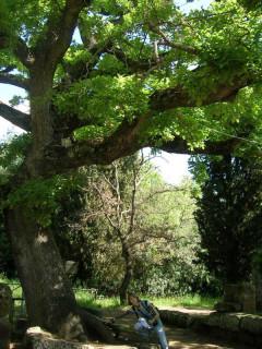 Под сенью дубов: а может, этруски - это кельты?