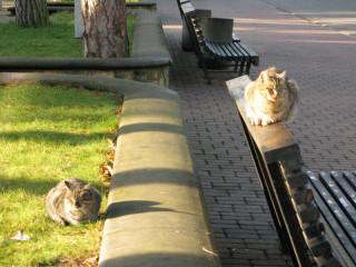 Кошачий дуэт в Юрмале