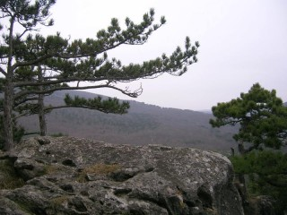 Венский Лес зимой