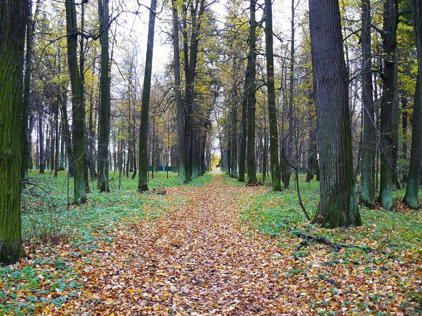 http://pics.livejournal.com/pushkino_2009/pic/000p1f0s