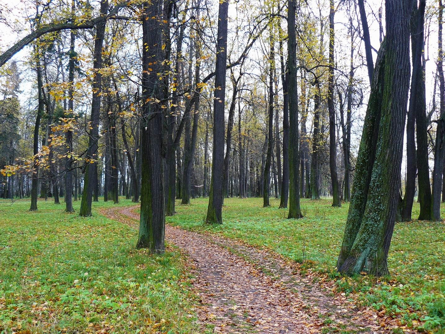 http://pics.livejournal.com/pushkino_2009/pic/000p3krh