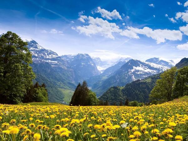 Одуванчики на фоне гор