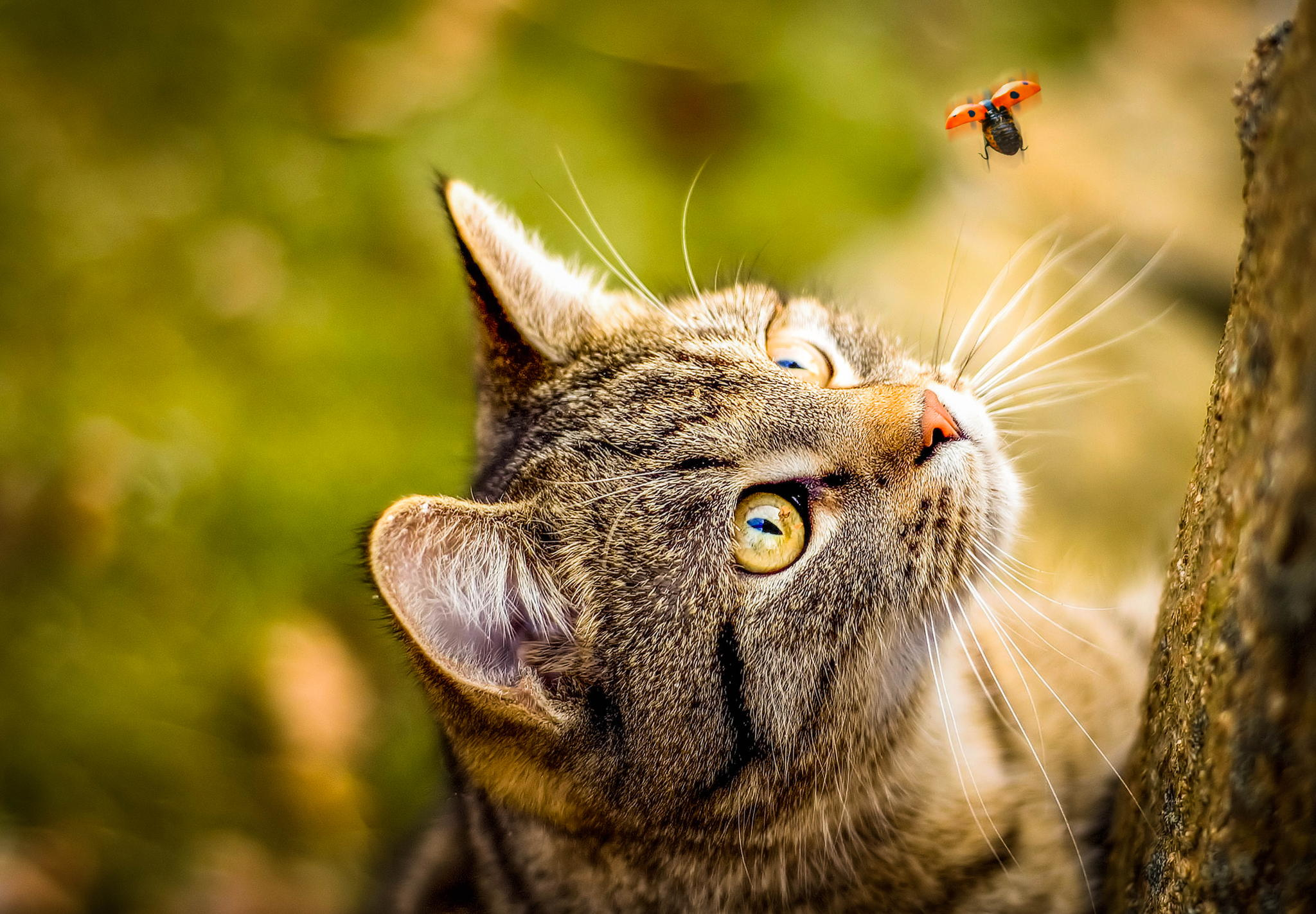 cat_and_bug