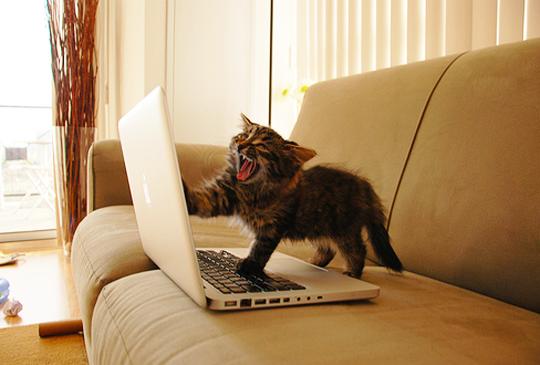 cat_on_mac