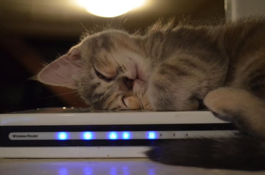 wifi_cat_03