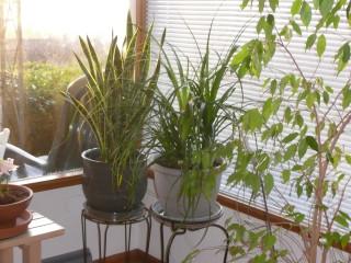 New Plants 032308