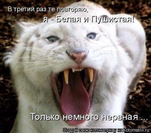 _AiMWP38ykQ
