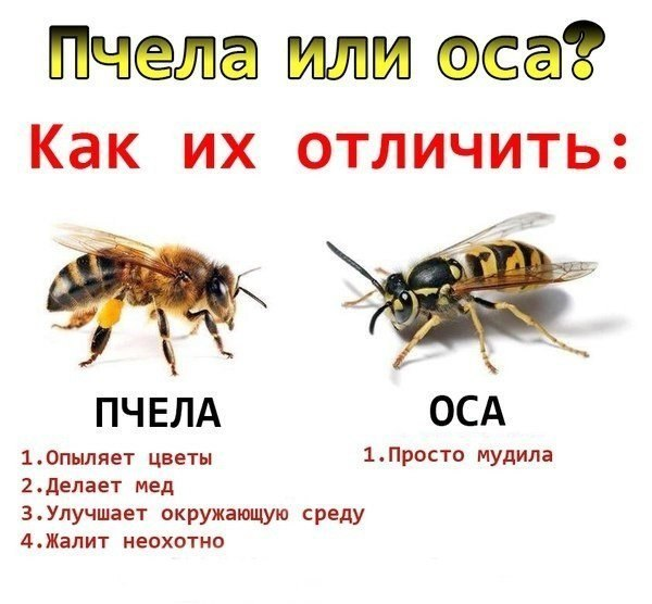 AIgPFK1Uzjc