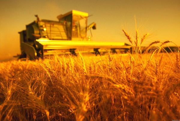 Организация производства в сельском хозяйстве