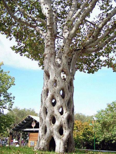 bigthrees014