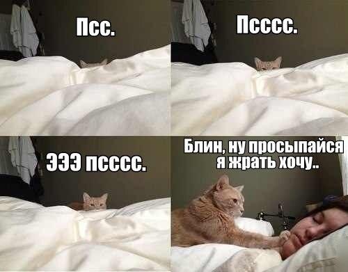 jEOqy__S-3c