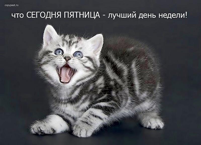 1393315_51bf88bbhskcwc