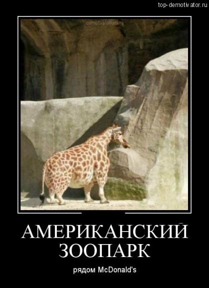 Американский-зоопарк-рядом-с-Макдональдсом-419x577