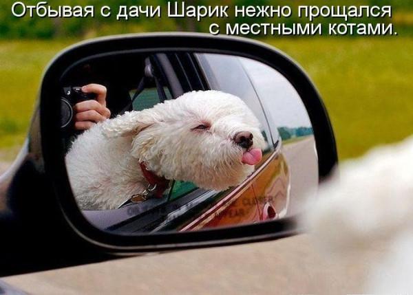 картинки-животные-юмор-песочница-245627