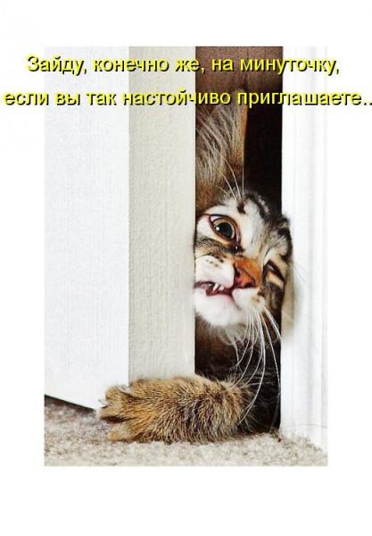 картинки-животные-юмор-песочница-245628