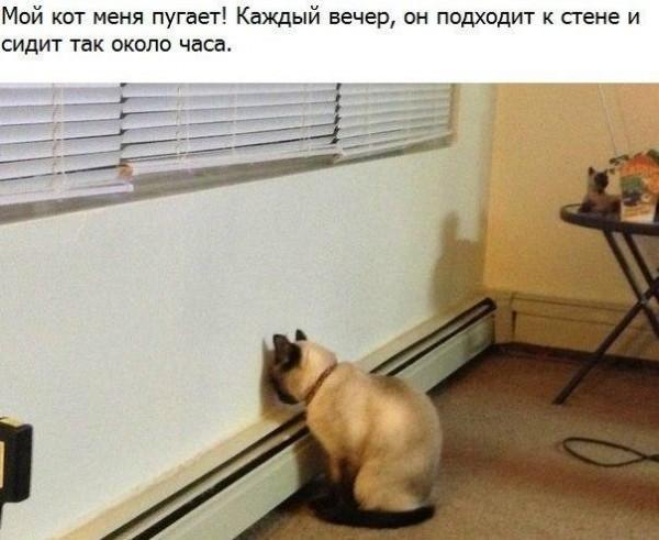 RDkfOKOvf_E