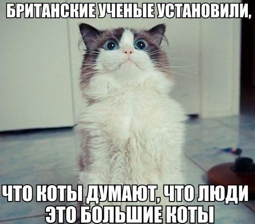 _c2uc6Htya8